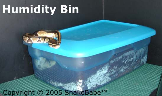 Humidity Bin In Snake Cage